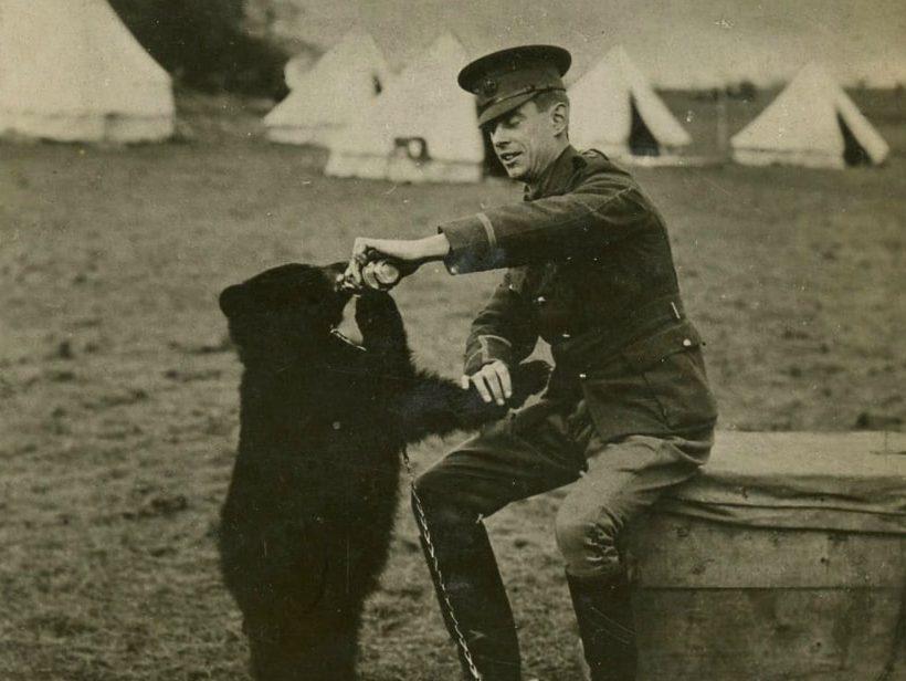 Winnipeg The Bear